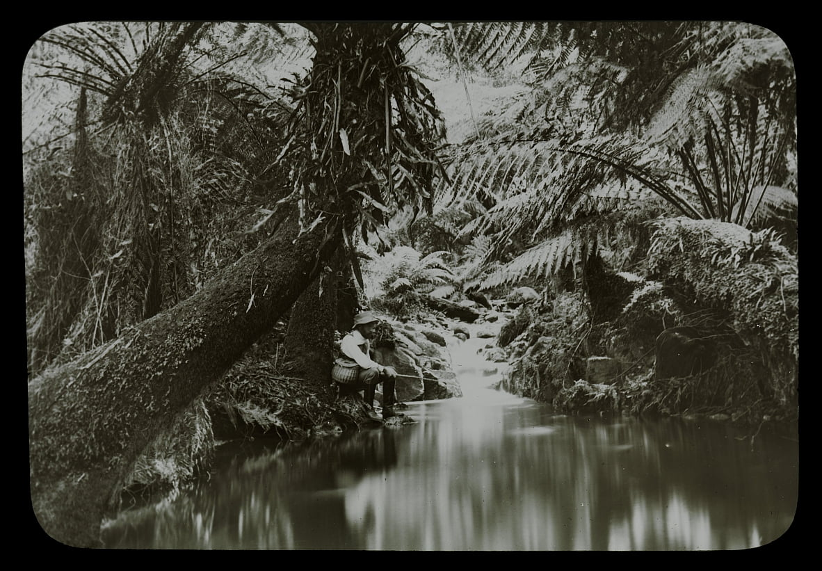 Fishing Pool, Sassafras Gully by Archibald James Campbell