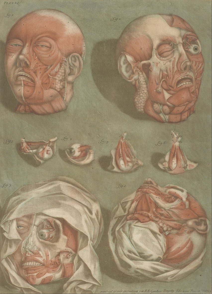 Plate 11, Studies of Heads and Eyes by Arnauld Eloi Gautier DAgoty