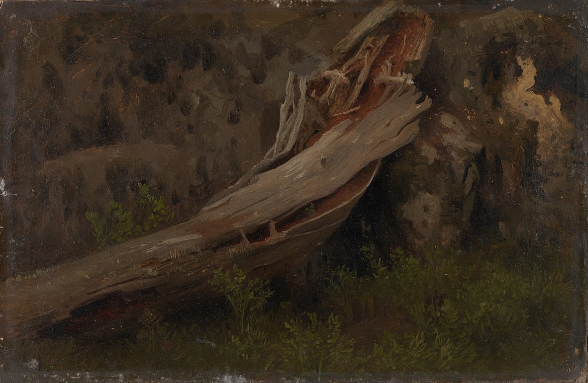 Study of a decaying Trunk by August Cappelen