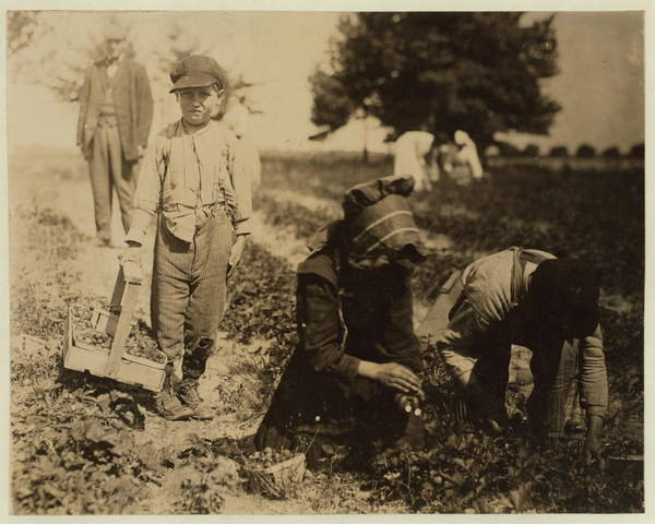 Pete Trombetta, aged 10, picking berries for a 6th season with his sister Mary, 11, who picks 100 quarts a day, and brother Salvatore Trombetta, aged 14, who picks 200 quarts at Johnson