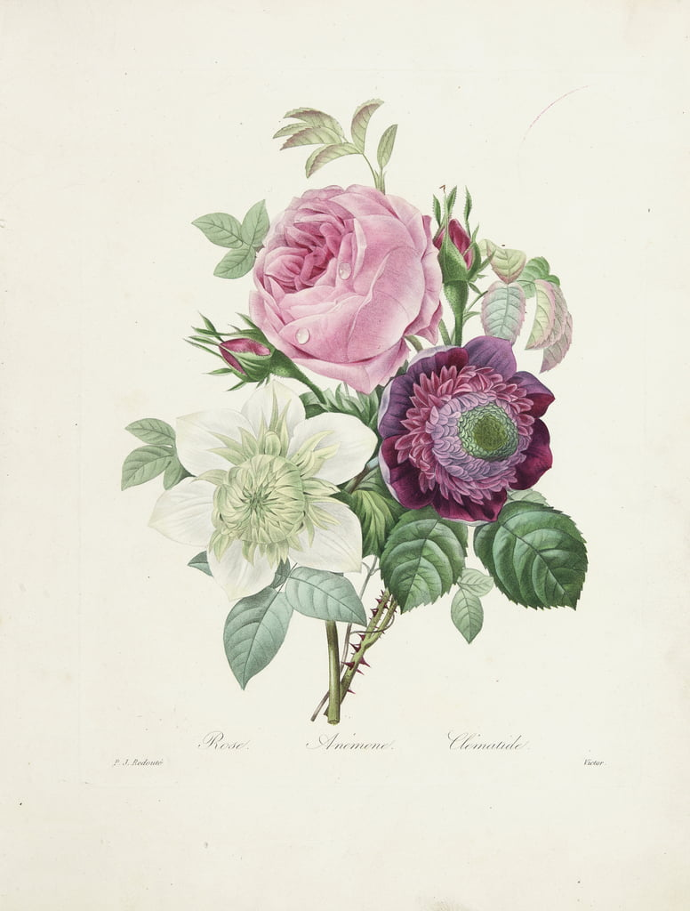 Rose, Anemone and Clematis, engraved by Victor, from